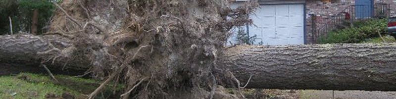sub header photo stump removal2