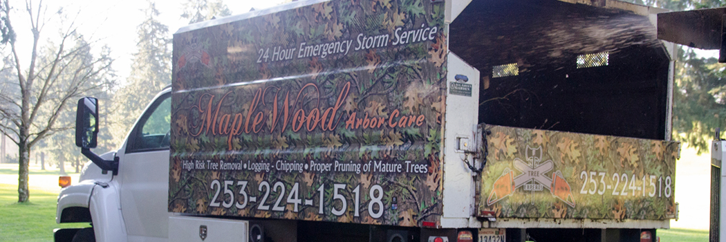 The Best Tree Service in Tacoma Period