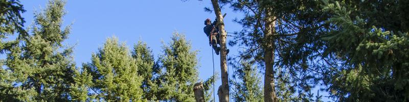 sub header photo tree removal